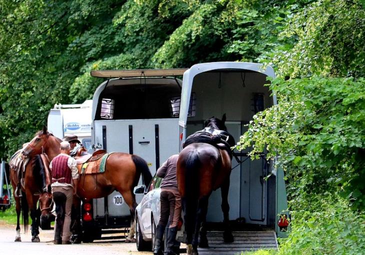 Pferdebesitzer brauchen unbedingt einen Pferdeanhänger!